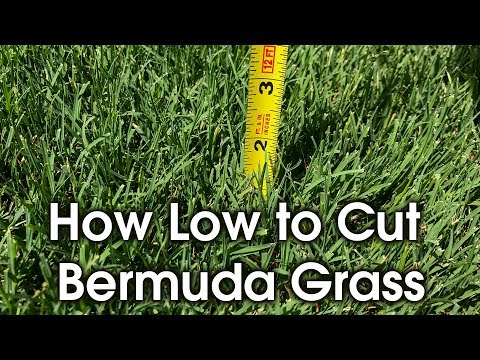 How Tall to Cut Bermuda - How Short to Cut Lawn