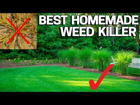 Best Homemade Organic Weed Control - Natural & Safe