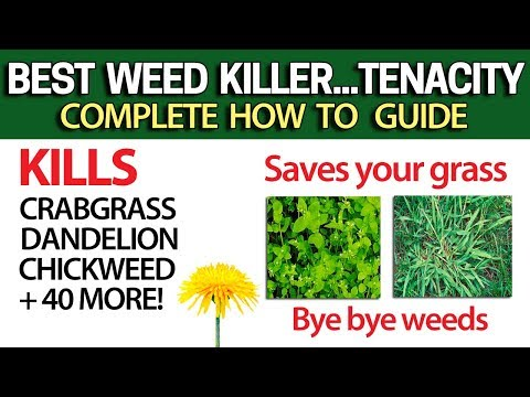Kill Weeds Crabgrass + 40 more & NOT your Grass with Tenacity - DIY