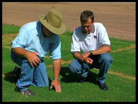 How To Choose The Right Bermudagrass Variety For Your Turf