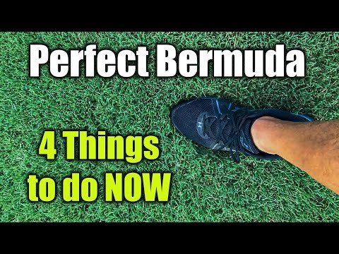 Improve Bermuda Grass Lawn Health and Thickness