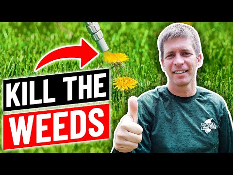 How to Kill Weeds in the Lawn Without Killing Grass