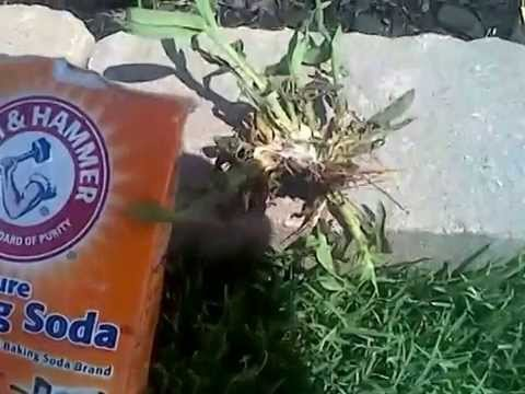 Baking Soda Kills Crabgrass INSTANTLY!