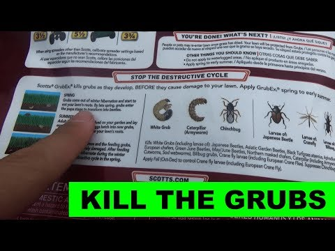 PSA - Time to apply GrubEx1, Kill the Grubs before they Kill Your Lawn