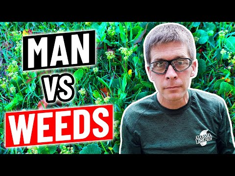 How to Fix a Lawn Full of WEEDS - DIY Weed Control