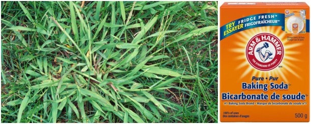 How to kill crabgrass with baking soda