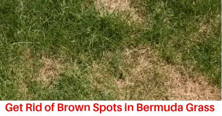 How to get rid of bermuda grass brown patch