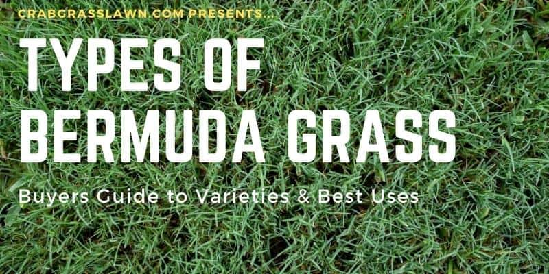 Types of Bermuda grass and varieties for different uses1