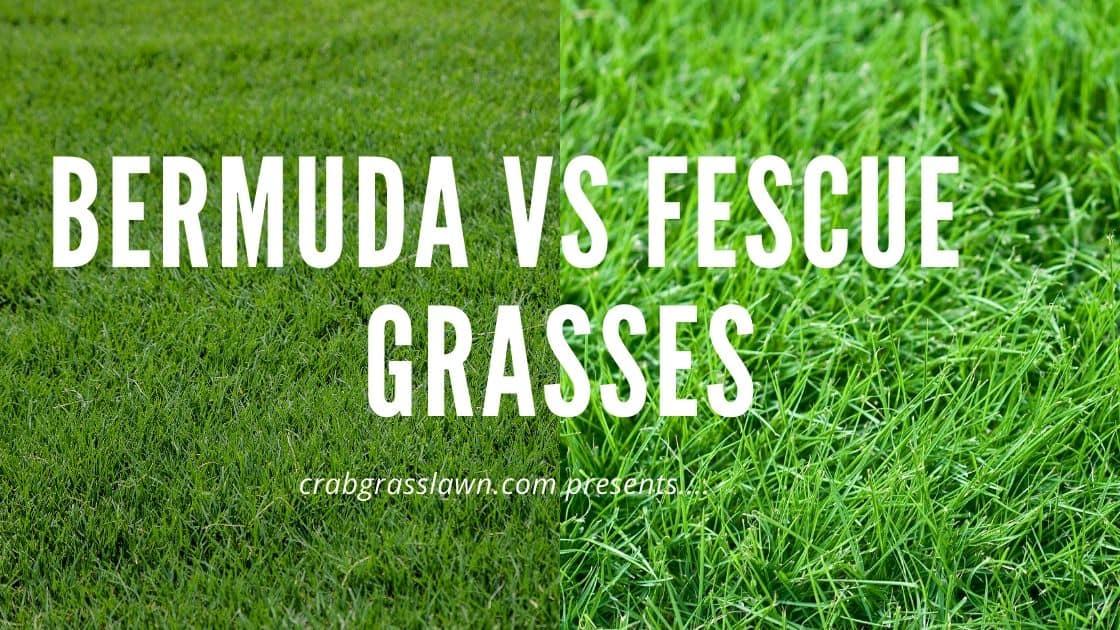 Bermuda vs fescue grasses
