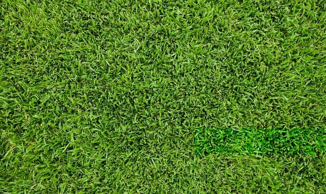 Bermuda Grass vs st Augustine grass - Bermuda grass lawn
