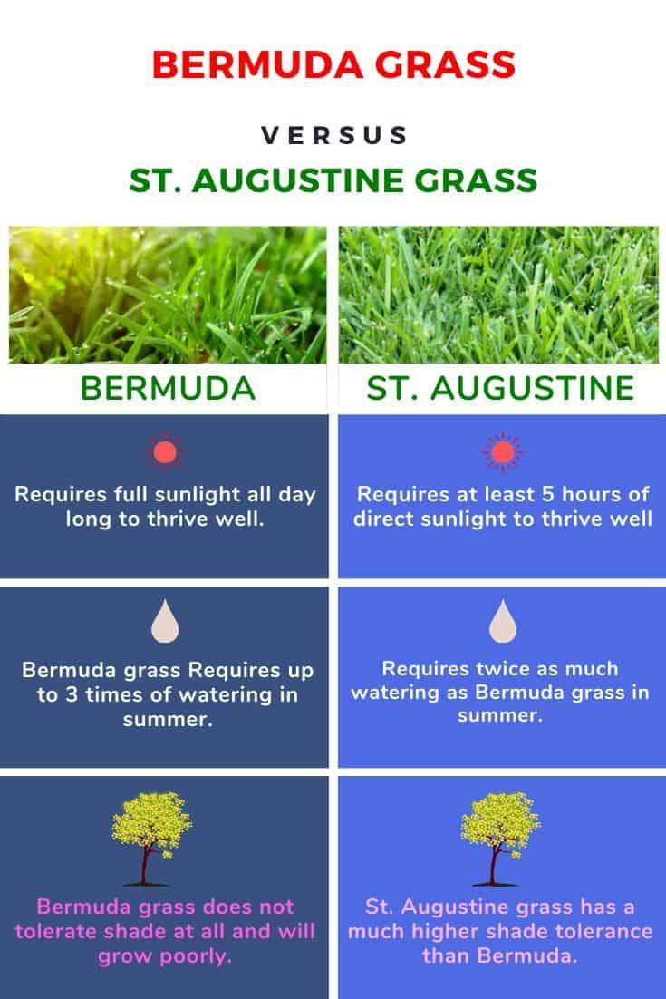 St Augustine Grass vs Bermuda Grass