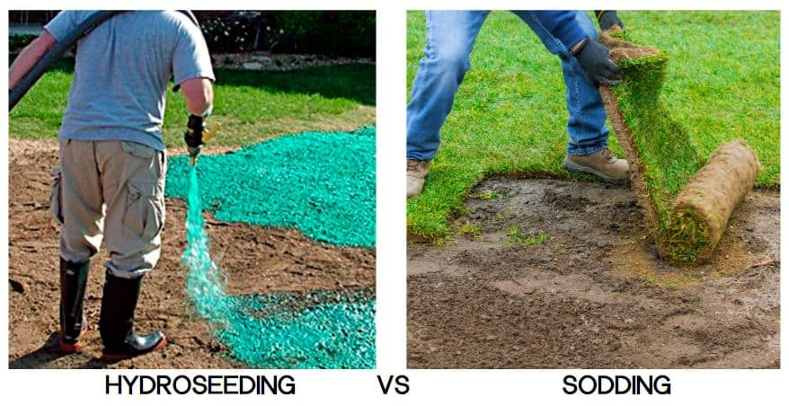 Sod vs hydroseed cost and differences