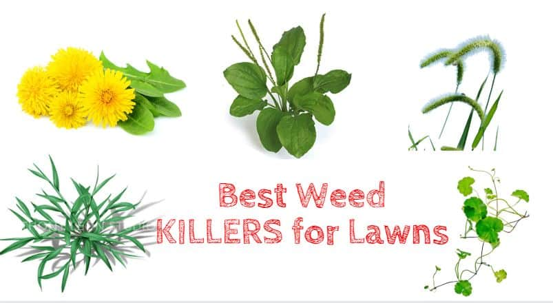 Best Weed Killers for Lawns - Broadleaf and grass weed killers