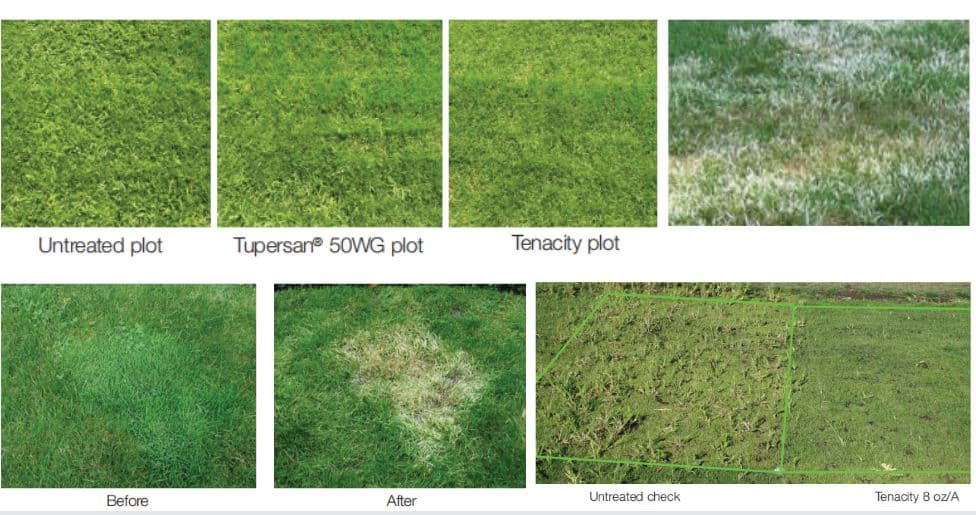 Best weed killer for lawns - Syngenta's Tenacity Weed Killer Samples