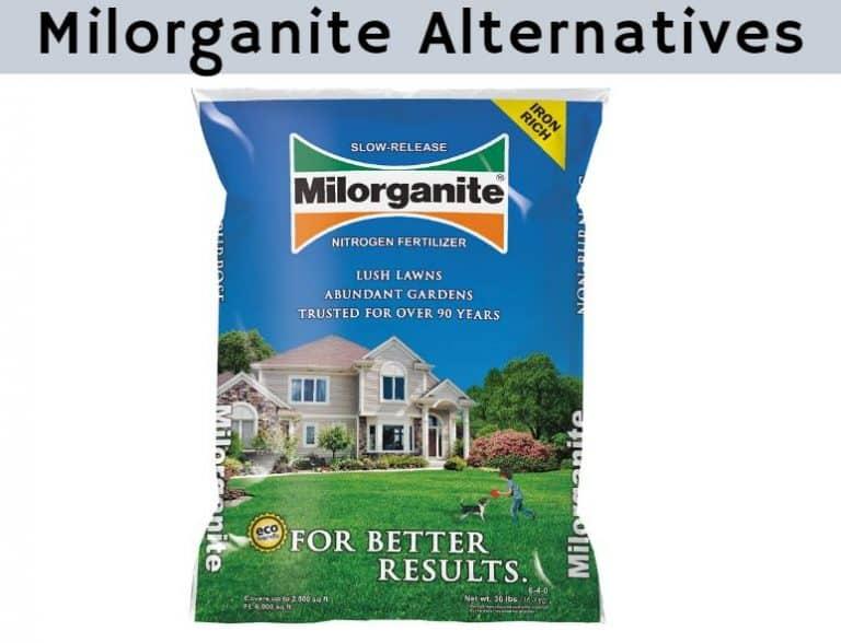 Milorganite Alternative