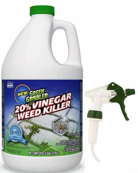 Best organic weed killer for lawns - Vinegar
