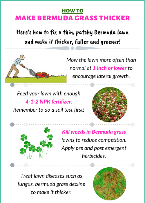 How To Make Bermuda Gr Thicker Greener And Fuller Cg Lawn