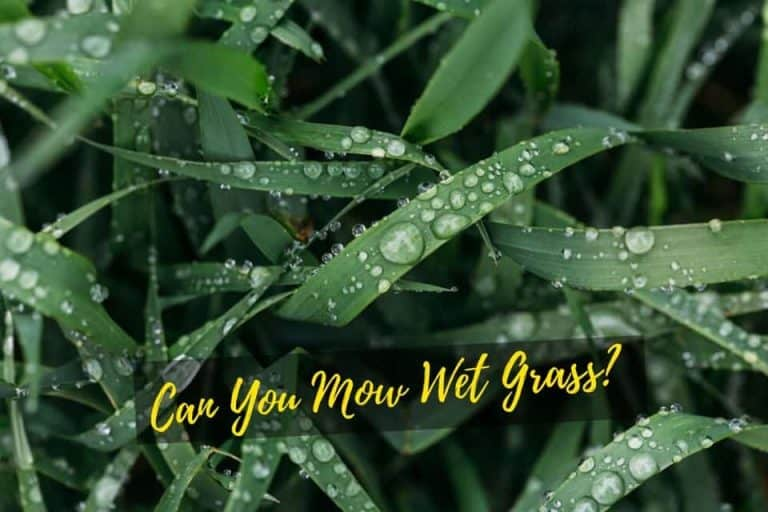 Can You Mow Wet Grass after rain