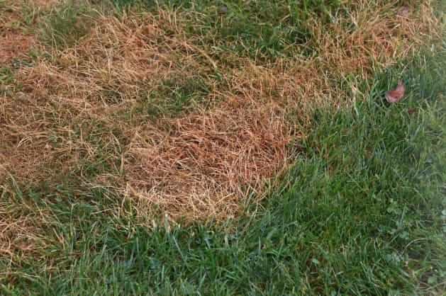 How To Get Rid Of Grubs In Lawn 6 Effective Ways Natural