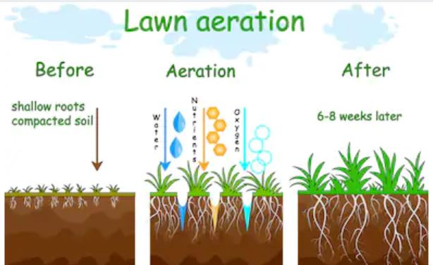 Should I aerate or dethatch first
