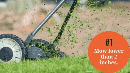 How to Overseed without Aerating - Mow lower than 2 inches