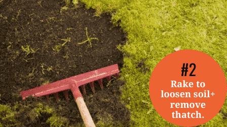 Overseed without aerating - rake to loosen soil