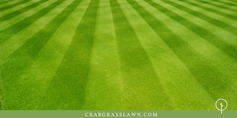basics of lawn care