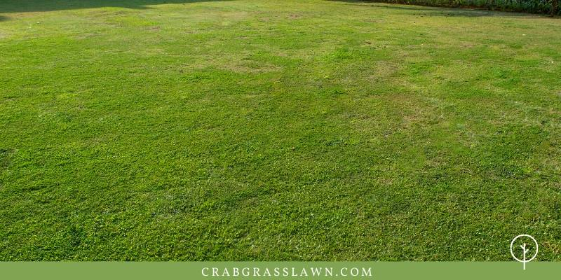 best bermuda for home lawns