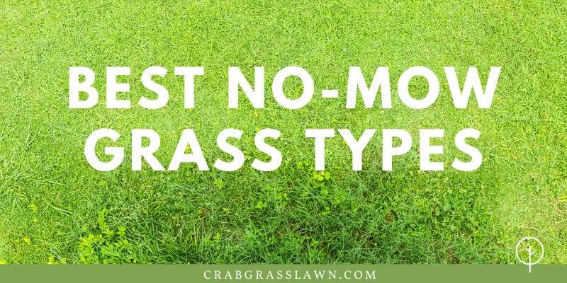 Best No-Mow Grass Types