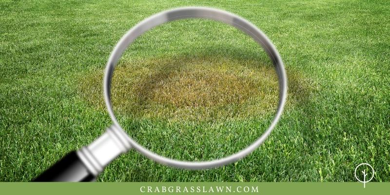 grass diseases