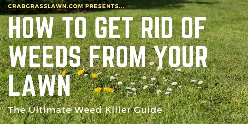 how to get rid of weeds from your lawn