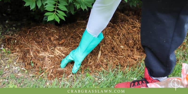 mulching in planter beds