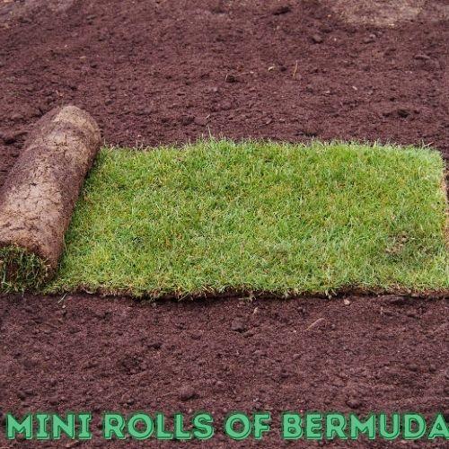 mini rolls of bermuda sod