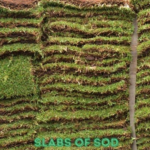 slabs of sod