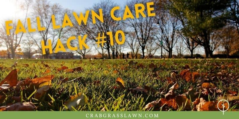 fall lawn care hacks water grass
