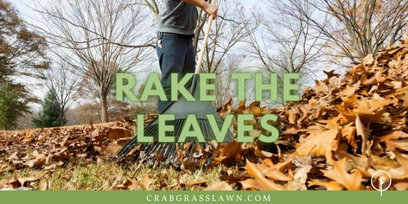 raking leaves in the fall