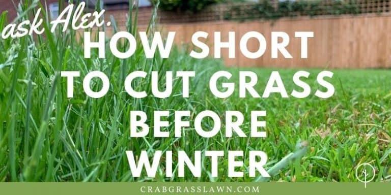 how short to cut grass before winter