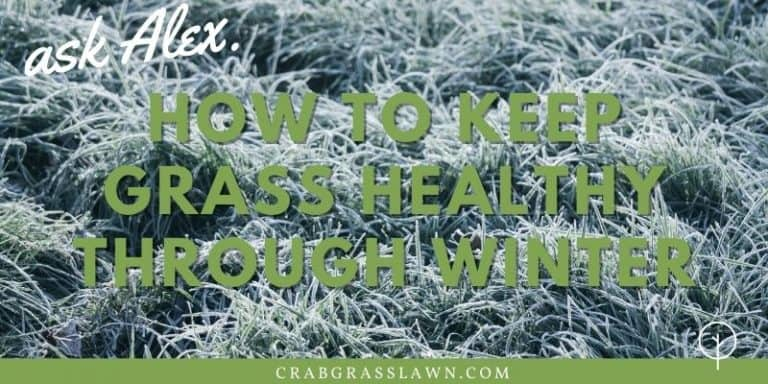 how to keep grass healthy through winter
