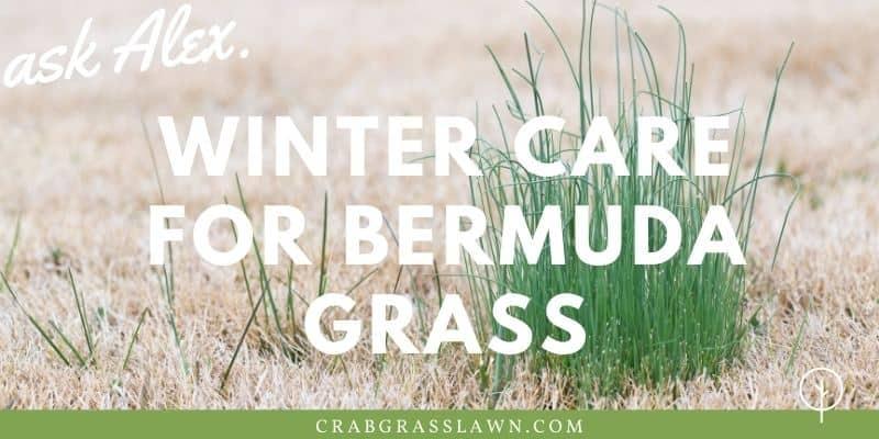 winter care for bermuda grass