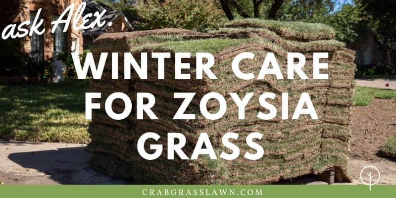 winter care for zoysia grass