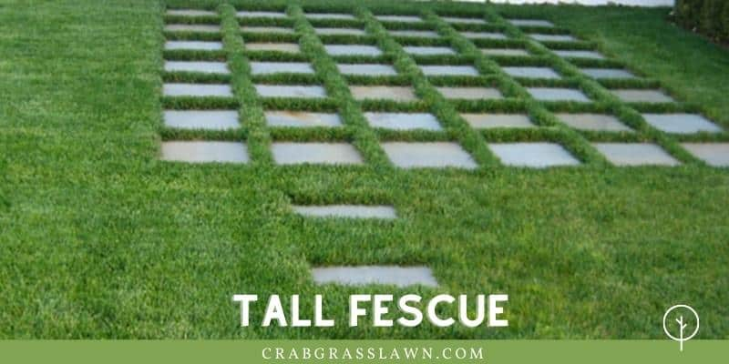 Tall Fescue Sod in Sand