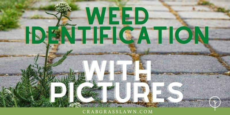 weed identification directory