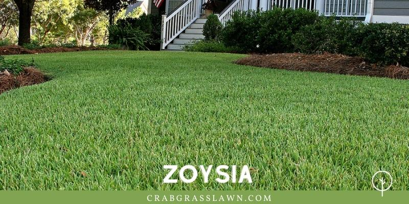 zoysia grass planted in sand