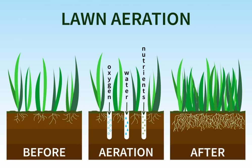stages of lawn aeration